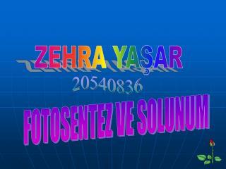 ZEHRA YASAR