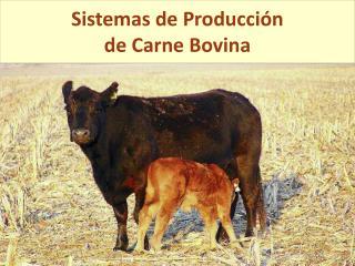 Sistemas de Producci n de Carne Bovina