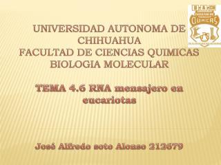 UNIVERSIDAD AUTONOMA DE CHIHUAHUA FACULTAD DE CIENCIAS QUIMICAS BIOLOGIA MOLECULAR  TEMA 4.6 RNA mensajero en eucariotas