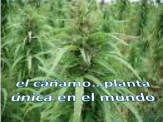El c  amo planta  nica en el mundo