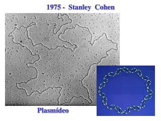 1975 -  Stanley  Cohen