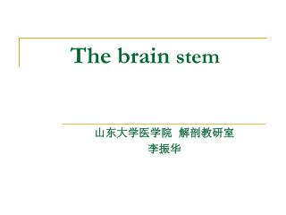 The brain stem