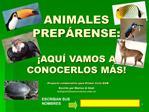 ANIMALES PREP RENSE:    AQU  VAMOS A CONOCERLOS M S  Proyecto colaborativo para Primer Ciclo EGB  Escrito por Marisa di