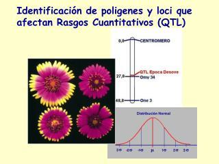 Identificaci n de poligenes y loci que afectan Rasgos Cuantitativos QTL