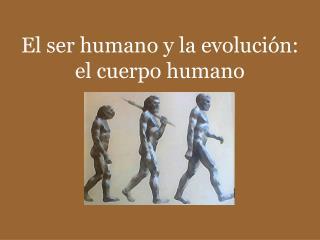 El ser humano y la evoluci n:  el cuerpo humano