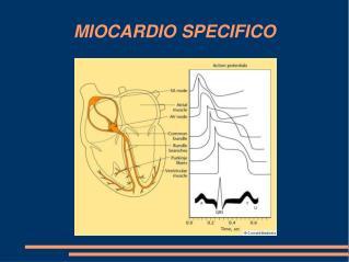 MIOCARDIO SPECIFICO