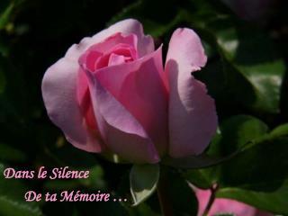 Dans le Silence        De ta M moire