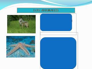 LOS ANIMALES INVERTEBRADOS   c mo los identifico: