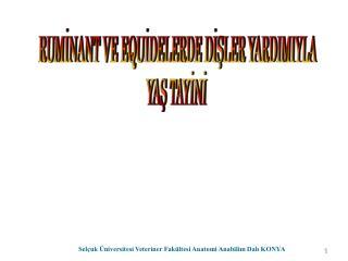 Sel uk  niversitesi Veteriner Fak ltesi Anatomi Anabilim Dali KONYA