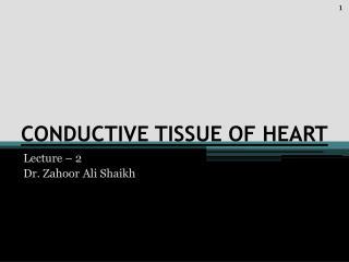 CONDUCTIVE TISSUE OF HEART