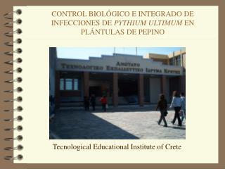 CONTROL BIOL GICO E INTEGRADO DE INFECCIONES DE PYTHIUM ULTIMUM EN PL NTULAS DE PEPINO