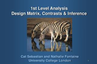 1st Level Analysis Design Matrix, Contrasts  Inference