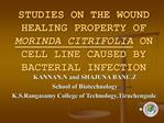 STUDIES ON THE WOUND HEALING PROPERTY OF MORINDA CITRIFOLIA ON CELL LINE CAUSED BY BACTERIAL INFECTION