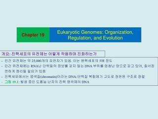 25,000  .   5    RNA     DNA     ,      chromatin DNA-       19.1:       DNA