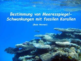 Bestimmung von Meeresspiegel- Schwankungen mit fossilen Korallen Bodo Werner