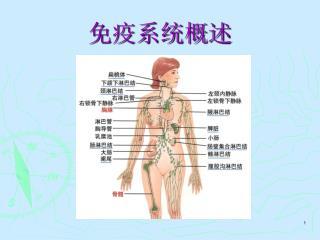 Central immune organs,