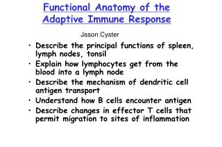 Functional Anatomy of the  Adaptive Immune Response