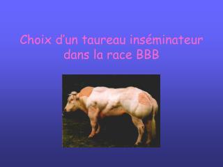 Choix d un taureau ins minateur dans la race BBB
