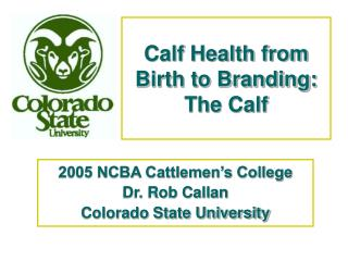 Calf Health from Birth to Branding: The Calf
