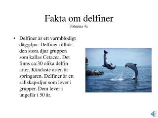 Fakta om delfiner Johanna 4a