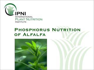 Phosphorus Nutrition of Alfalfa