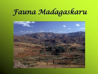 Fauna Madagaskaru