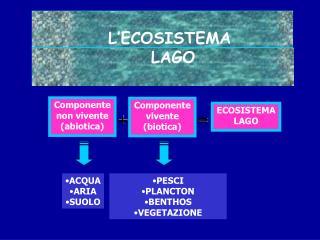 L ECOSISTEMA  LAGO