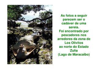 As fotos a seguir parecem ser o cad ver de uma sereia. Foi encontrado por pescadores nos arredores da zona de Los Olivit