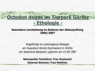 Octodon degus im Tierpark G rlitz - Ethologie -