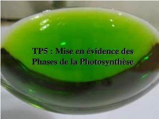 TP5 : Mise en  vidence des Phases de la Photosynth se