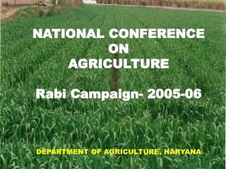 NATIONAL CONFERENCE  ON  AGRICULTURE  Rabi Campaign- 2005-06