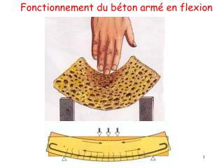 Fonctionnement du b ton arm  en flexion