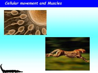 Cellular movement and Muscles