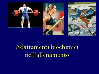 Adattamenti biochimici nell allenamento