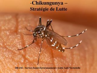 Chikungunya    Strat gie de Lutte