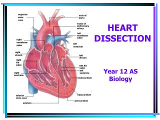 HEART DISSECTION