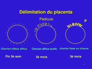 D limitation du placenta