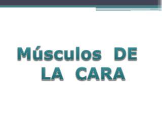 M sculos  DE   LA  CARA