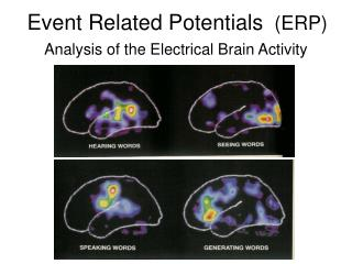 Event Related Potentials  ERP