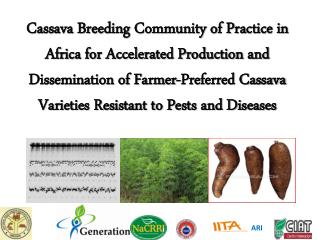 Cassava Breeding Community of Practice in Africa for Accelerated Production and Dissemination of Farmer-Preferred Cassav