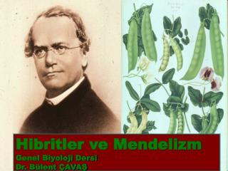 Hibritler ve Mendelizm Genel Biyoloji Dersi Dr. B lent  AVAS