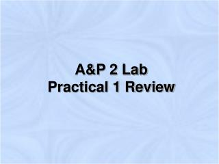 AP 2 Lab  Practical 1 Review