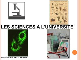 LES SCIENCES A L UNIVERSITE