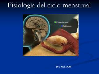 Fisiolog a del ciclo menstrual