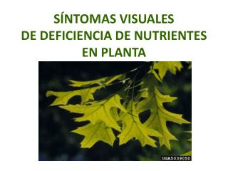 S NTOMAS VISUALES  DE DEFICIENCIA DE NUTRIENTES EN PLANTA