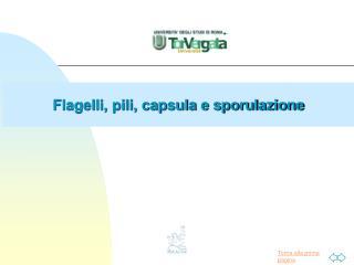 Flagelli, pili, capsula e sporulazione