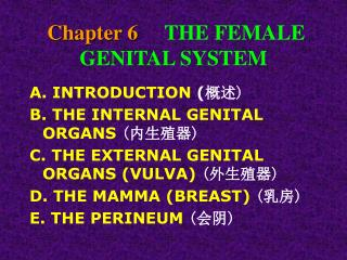Chapter 6     THE FEMALE GENITAL SYSTEM