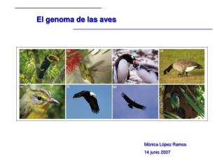 El genoma de las aves