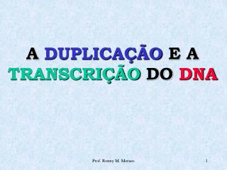 A DUPLICA  O E A TRANSCRI  O DO DNA