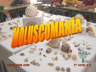 MOLUSCOMAN A